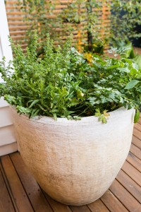 Outdoor herbs